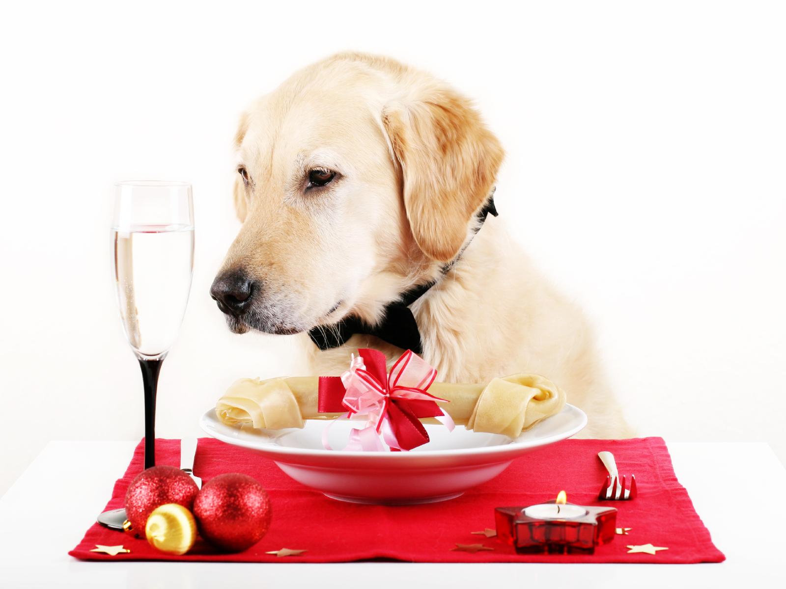 Can I Feed My Senior Dog Puppy Food