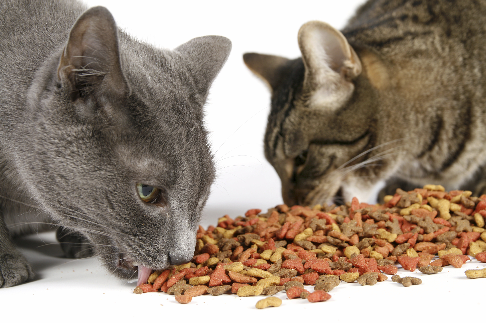 What's the Best Food to Feed Your Cats? - USA Pet Cover