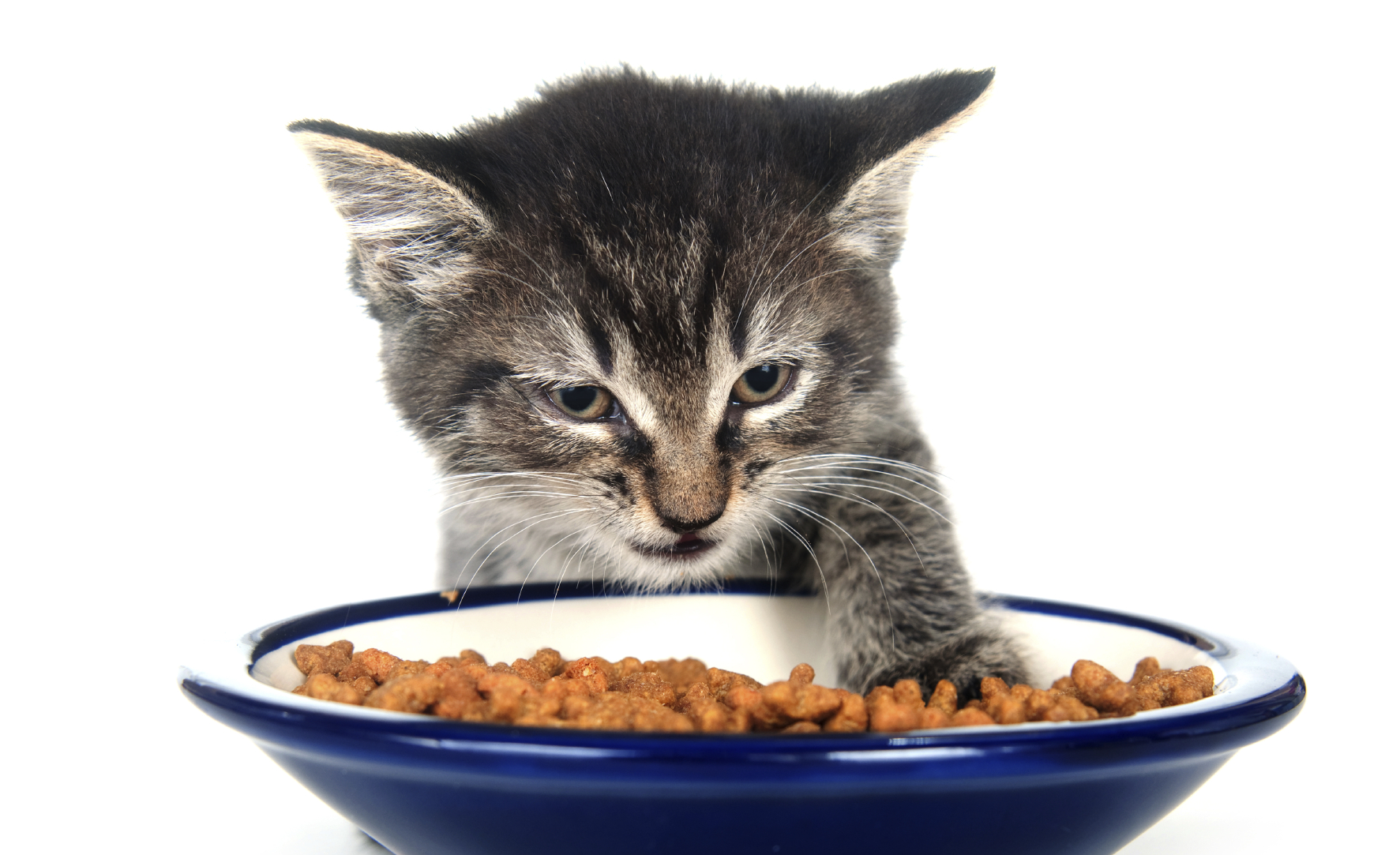 Cat Food Ingredients Allergies