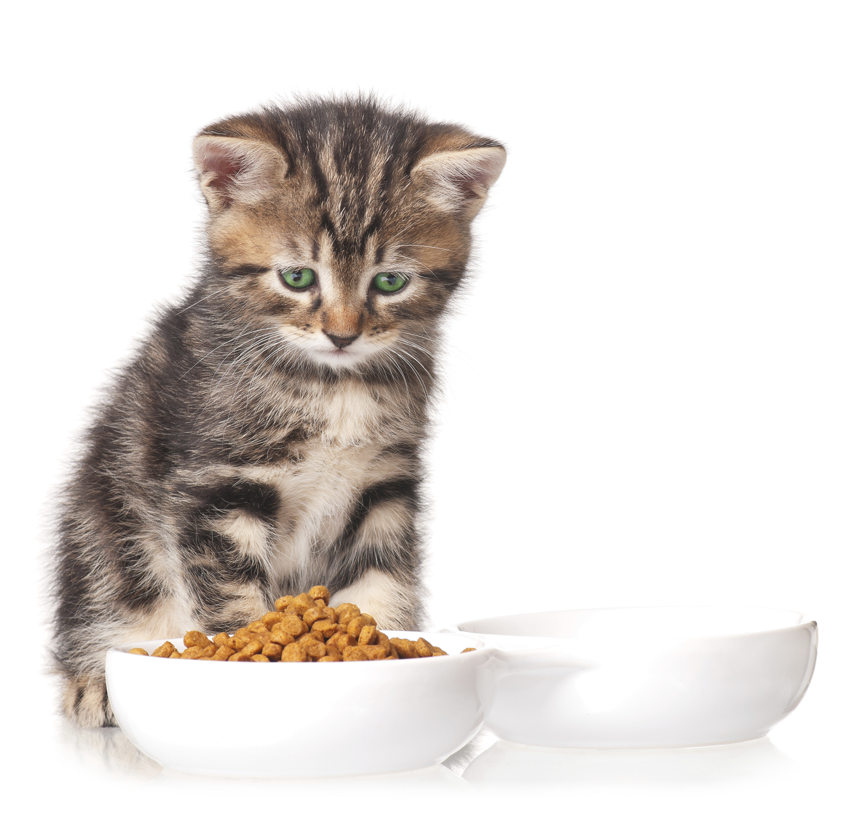 Can You Feed Kittens Wet Cat Food