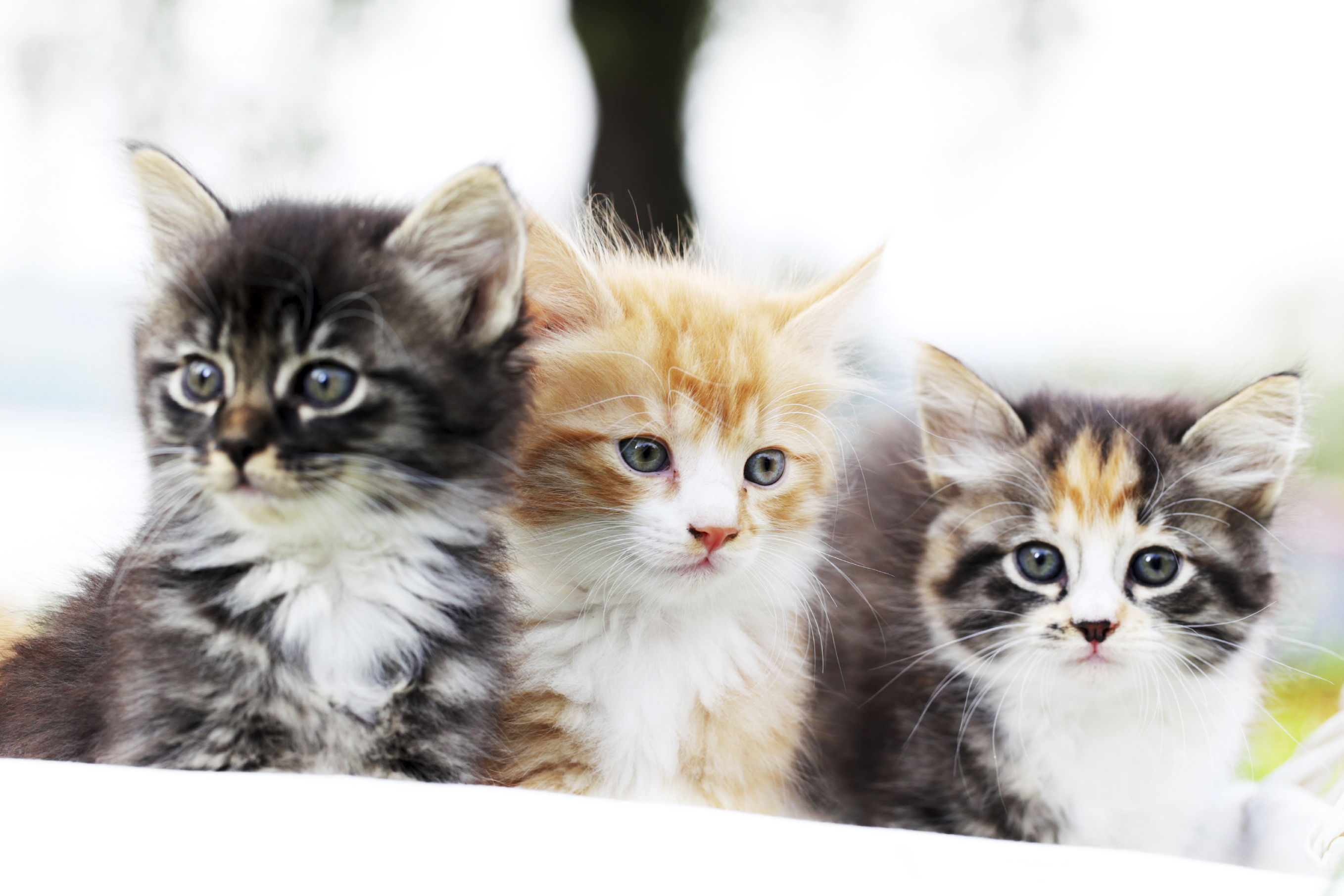 Some top tips for the best kitten health care The three cats