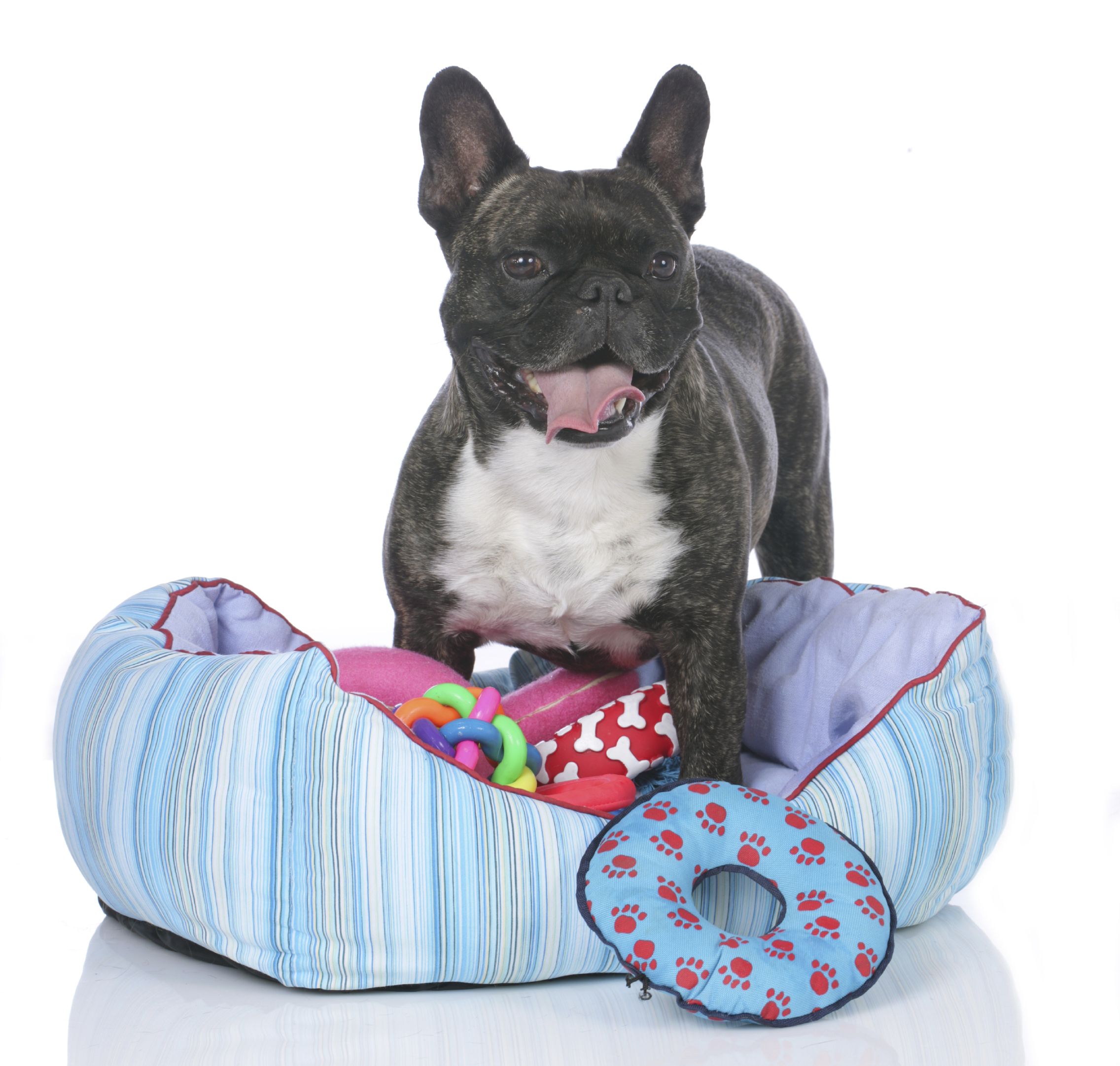 The Lowdown on Dog Beds Including Super Cool Designs