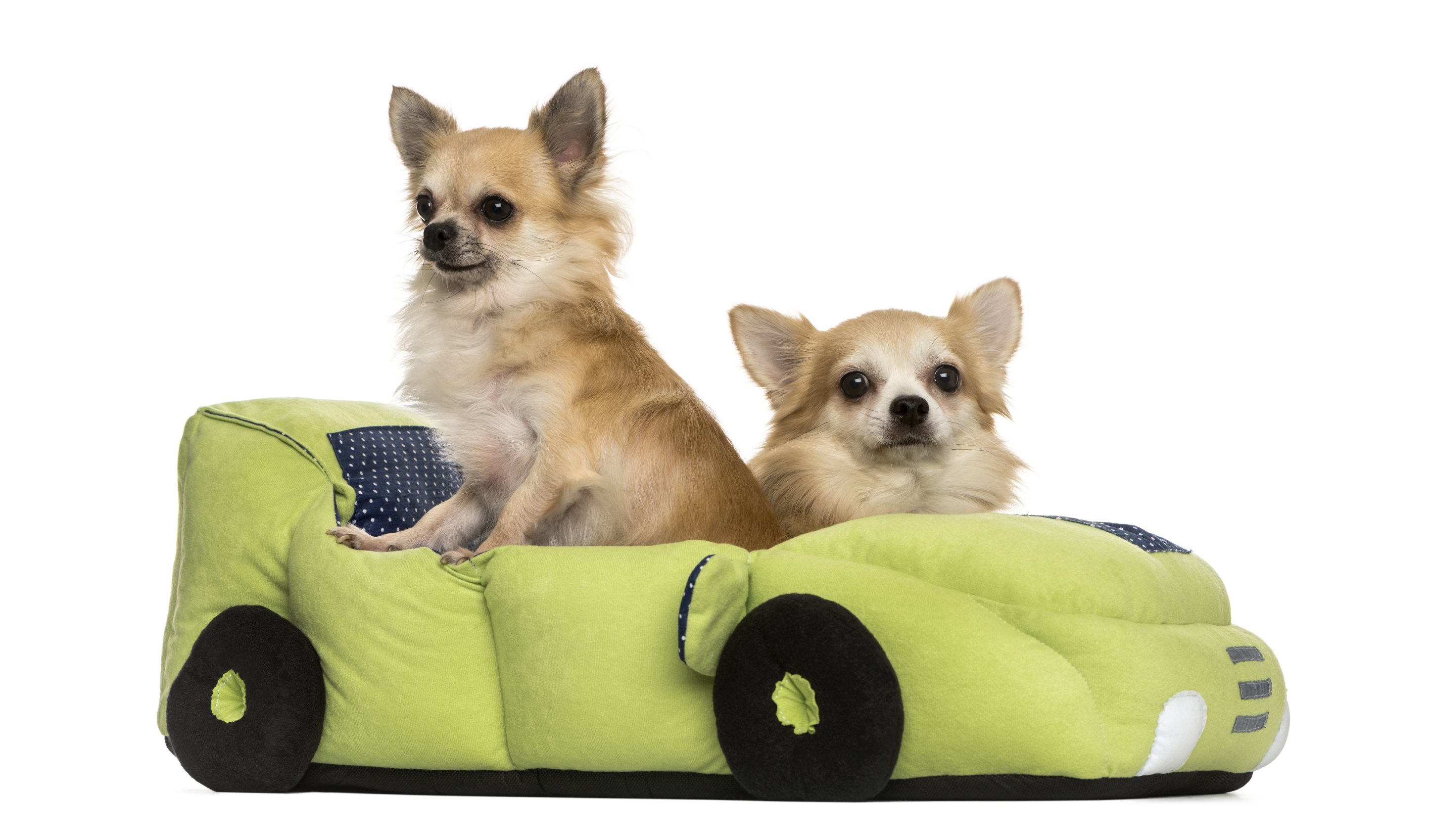The Lowdown on Dog Bed...