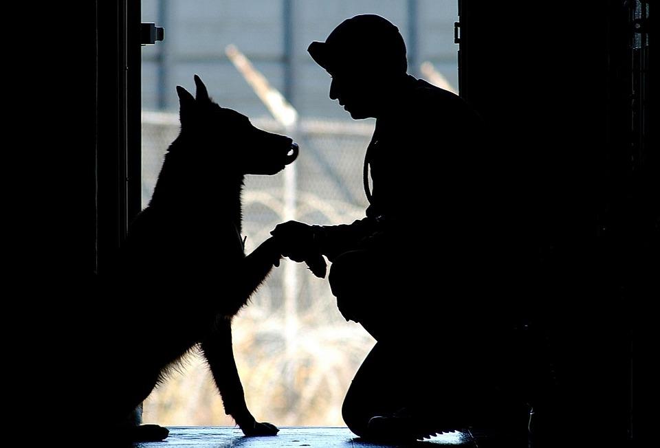 Adopting A Soldier Dog