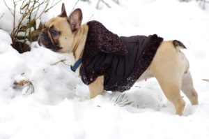 how to keep your outside dog warm in the winter