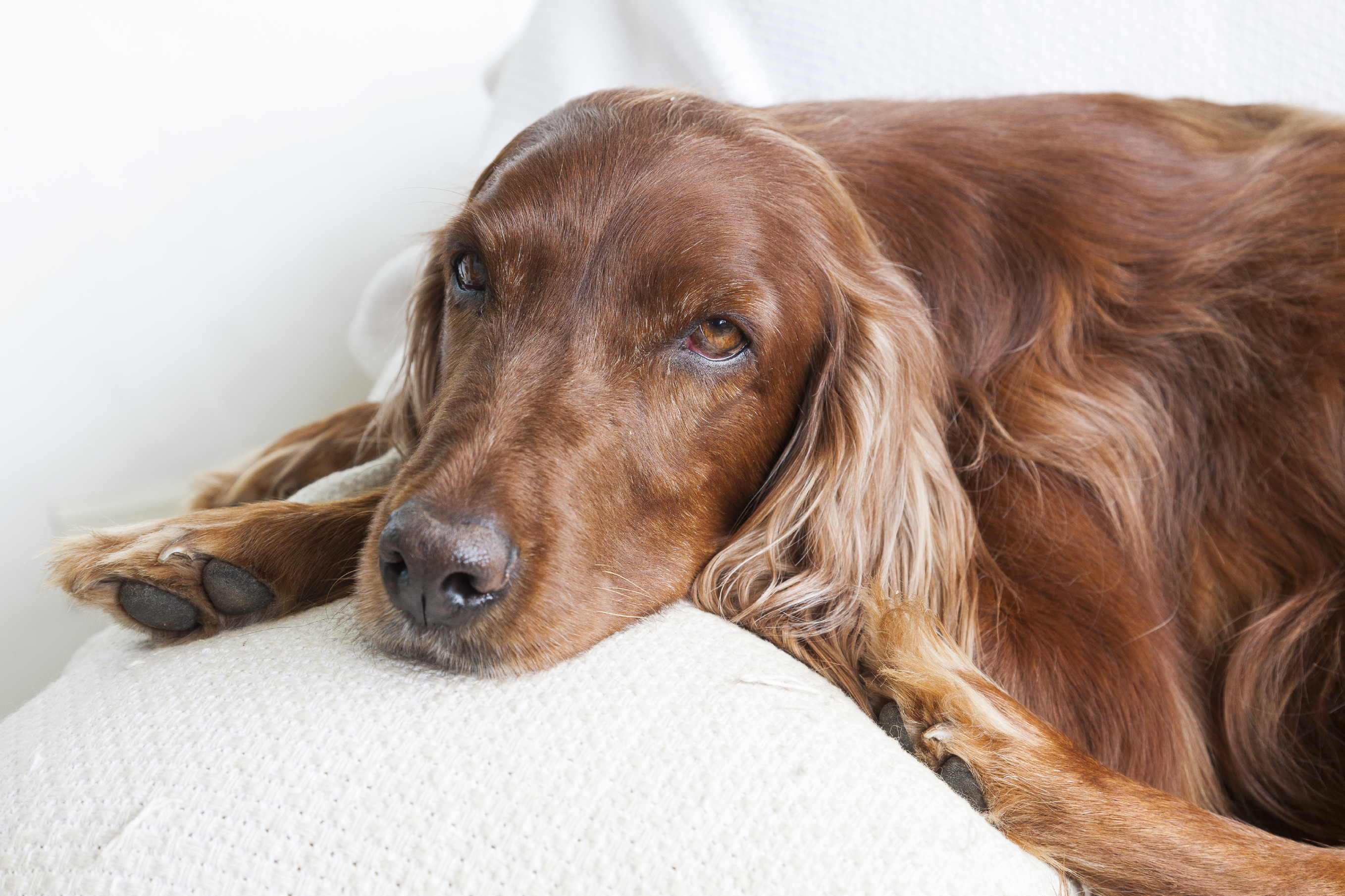 The Most Pet Friendly Fabrics For Furniture Usa Pet Cover