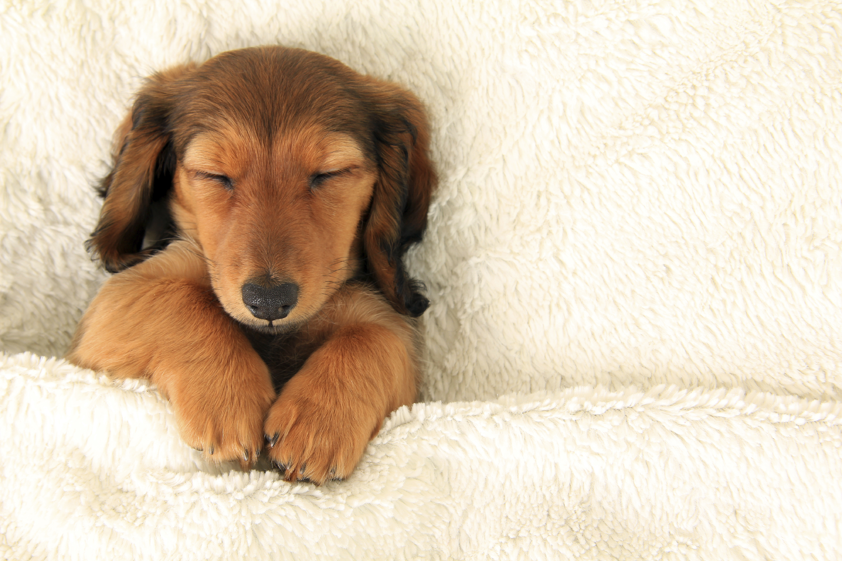 Top Tips On How To Provide The Best Puppy Health Care